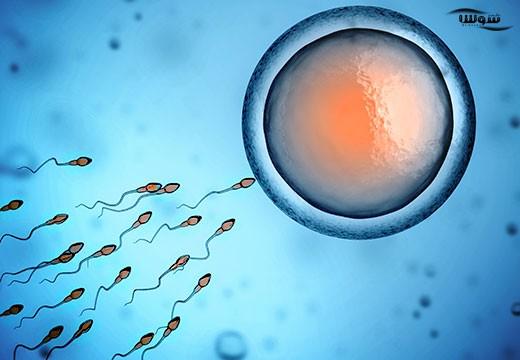 ناباروری در مردان  (Men infertility)