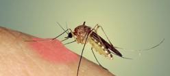 نیش حشرات