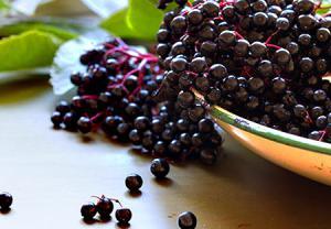 آقطی سیاه میوه تقویت کننده سیستم ایمنی بدن