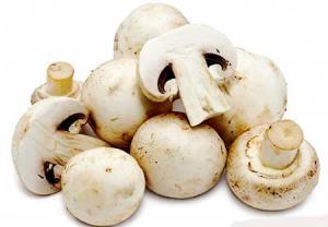 قارچ میتاکی