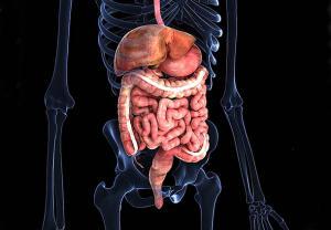 عوامل خطر یا ریسک فاکتورها در بیماری آلودگی به انگل ژیاردیا