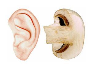 گوش-قارچ