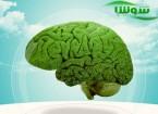 کدام مواد غذایی برای پیشگیری از بیماری آلزایمر مناسب هستند؟