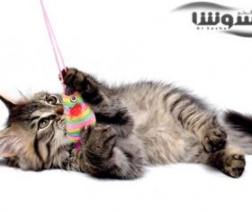 فواید نگهداری گربه در خانه برای سلامت انسان