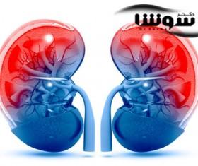 بیماری های کلیوی چگونه به وجود میآیند