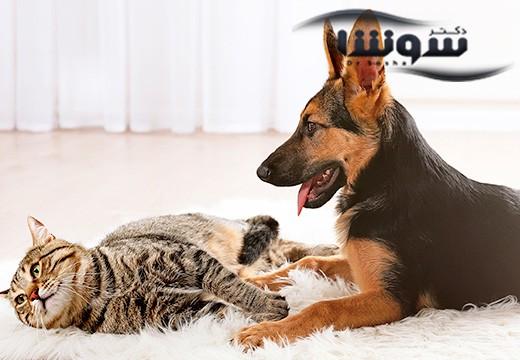 حیوانات خانگی درمانی برای مشکلات روحی و روانی
