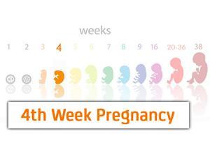 رشد جنین در هفته چهارم بارداری