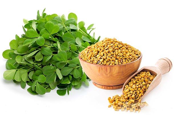 درمان لاغری مفرط با استفاده از داروی گیاهی شنبلیله