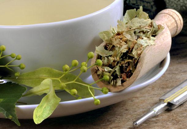 درمان لاغری مفرط با استفاده از گیاه ژنتیان زرد