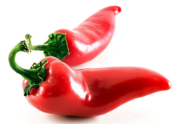 گیاه دارویی فلفل قرمز برای لاغری شکم