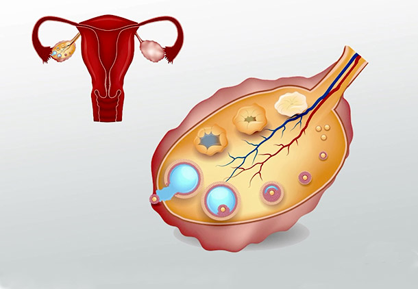 تکامل تخمدانها