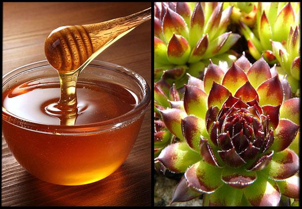درمان فیبروم با عسل و گیاهان دارویی