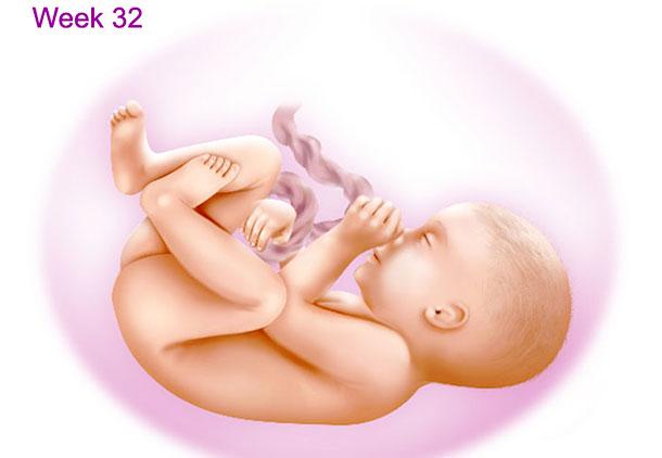 تغییرات بدن جنین در هفته سی و دوم بارداری